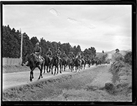 North Auckland Mounted Rifles.